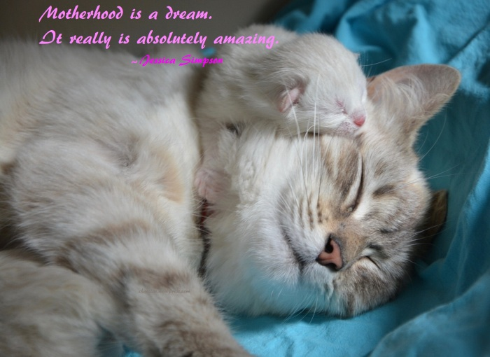 Napping Kitten with Napping Mom - Motherhood is a dream. It really is absolutely amazing. ~ Jessica Simpson - Happy Mother's Day - Motherhood is a dream. It really is absolutely amazing. ~ Jessica Simpson